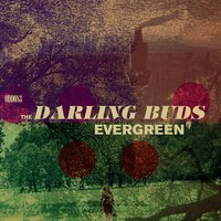 Evergreen - EP — The Darling Buds