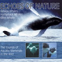 Echoes Of Nature — Delta Music, Walgesänge