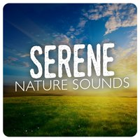 Serene Nature Sounds — Nature Sound Collection, Nature Sound Collection|Nature Sounds