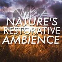 Nature's Restorative Ambience — Nature Ambience