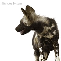 Nervous System — High Above The Storm