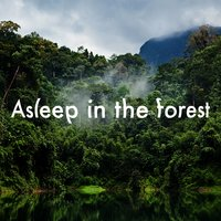 Asleep in the Forest — Dreams of Nature