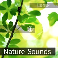 Nature Sounds — Tracks of Nature