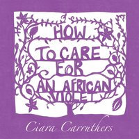 How to Care for an African Violet — Ciara Carruthers