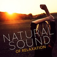 Natural Sound of Relaxation — Sounds of Nature Relaxation