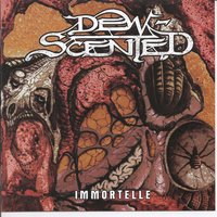 Immortelle — Dew-Scented