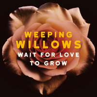 Wait for Love to Grow — Weeping Willows