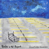 Domesticated Drowsiness — Birds in the Airport