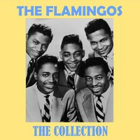 The Collection — The Flamingos