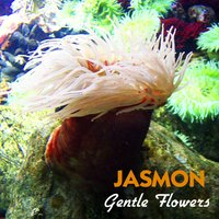 Gentle Flowers — Jasmon