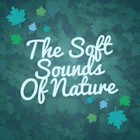 The Soft Sounds of Nature — Nature Sounds Nature Music, Nature Sound Series, Nature Sound Series|Nature Sounds|Nature Sounds Nature Music