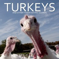 Turkeys and Other Thanksgiving Sounds — Pro Sound Effects Library