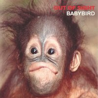 Out of Sight — Babybird
