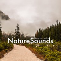 De-Stress with Nature Sounds — Sleep Sound Library