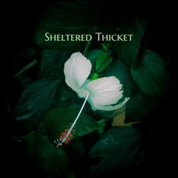 Sheltered Thicket — Lenora Forest