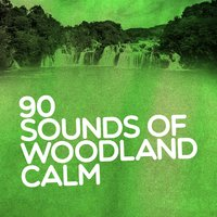 90 Sounds of Woodland Calm: Natural Relaxation, Peace Rest, Mindful Meditation, Spa Zen — сборник