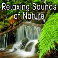 Relaxing Sounds of Nature — Nature Soundscape