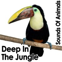Sounds of Animals: Deep in the Jungle — Dr. Sound Effects
