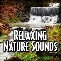 Relaxing Nature Sounds — Relax Meditate Sleep