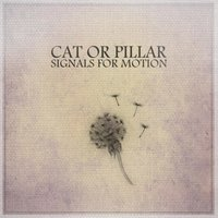 Signals for Motion — Cat or Pillar