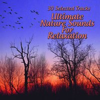 Ultimate Nature Sounds For Relaxation — сборник