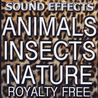 Animal Sound FX, Insects and Nature — Sound Effects Royalty Free