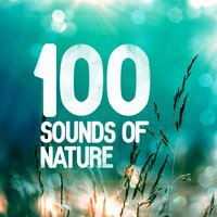 100 Sounds of Nature — Natural Sounds, Nature Sound Collection, Natural Sounds|Nature Sound Collection|Nature Sounds