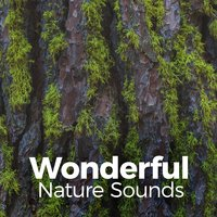 Wonderful Nature Sounds — Nature Sound Series
