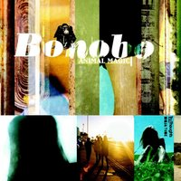 Animal Magic — Bonobo