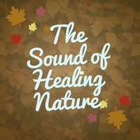 The Sound of Healing Nature — The Healing Sounds of Nature