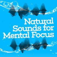 Natural Sounds for Mental Focus — сборник
