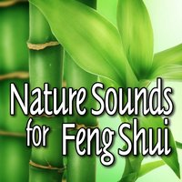 Nature Sounds for Feng Shui — Qi Dong