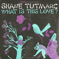 What Is This Love? — Shane Tutmarc