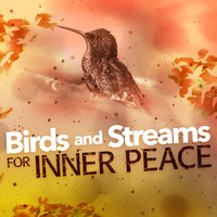 Birds and Streams for Inner Peace — Forest Sounds Relaxing Spa Music Singing Birds