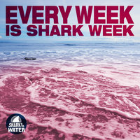 Every Week Is Shark Week — Shark in the Water