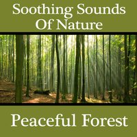 Soothing Sounds of Nature - Peaceful Forest — Pro Sound Effects Library