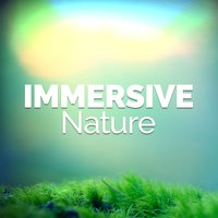 Immersive Nature — Nature Sounds 2015