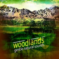 Woodlands: Gentle Natural Sounds — Soothing Sounds