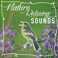 Nature: Relaxing Sounds — Звуки природы