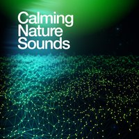 Calming Nature Sounds — Nature Sounds Nature Music
