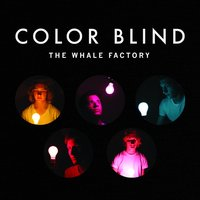 Color Blind — The Whale Factory
