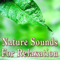 Nature Sounds for Relaxation — Звуки природы