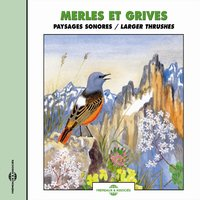 Merles et grives - Larger Thrushes — Frémeaux Nature