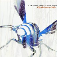 Fly Between Falls — ALO (Animal Liberation Orchestra)