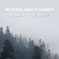 Woodland Sounds: Natural White Noise — Sounds of Nature White Noise for Mindfulness, Meditation and Relaxation
