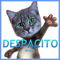 Despacito — Tom The Cat