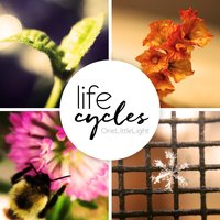 Life Cycles — OneLittleLight