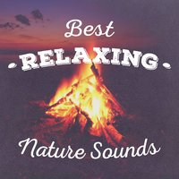 Best Relaxing Nature Sounds — сборник