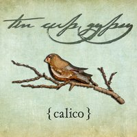 Calico — Tin Cup Gypsy
