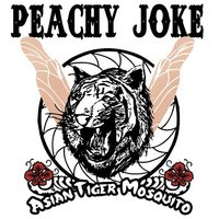Asian Tiger Mosquito — Peachy Joke
